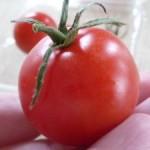 おいしっくすプチトマト