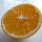 オイシックスレモン